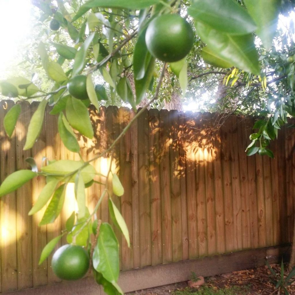 Oh how I will miss these orange trees when wehellip
